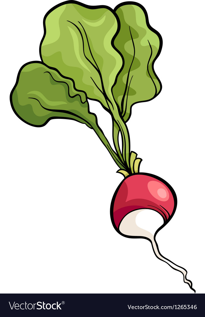 Radish vegetable cartoon vector | Price: 1 Credit (USD $1)
