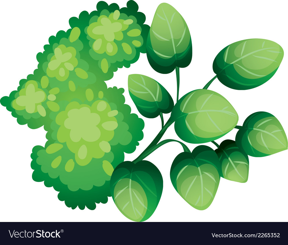 A topview of the green leafy plants vector | Price: 1 Credit (USD $1)