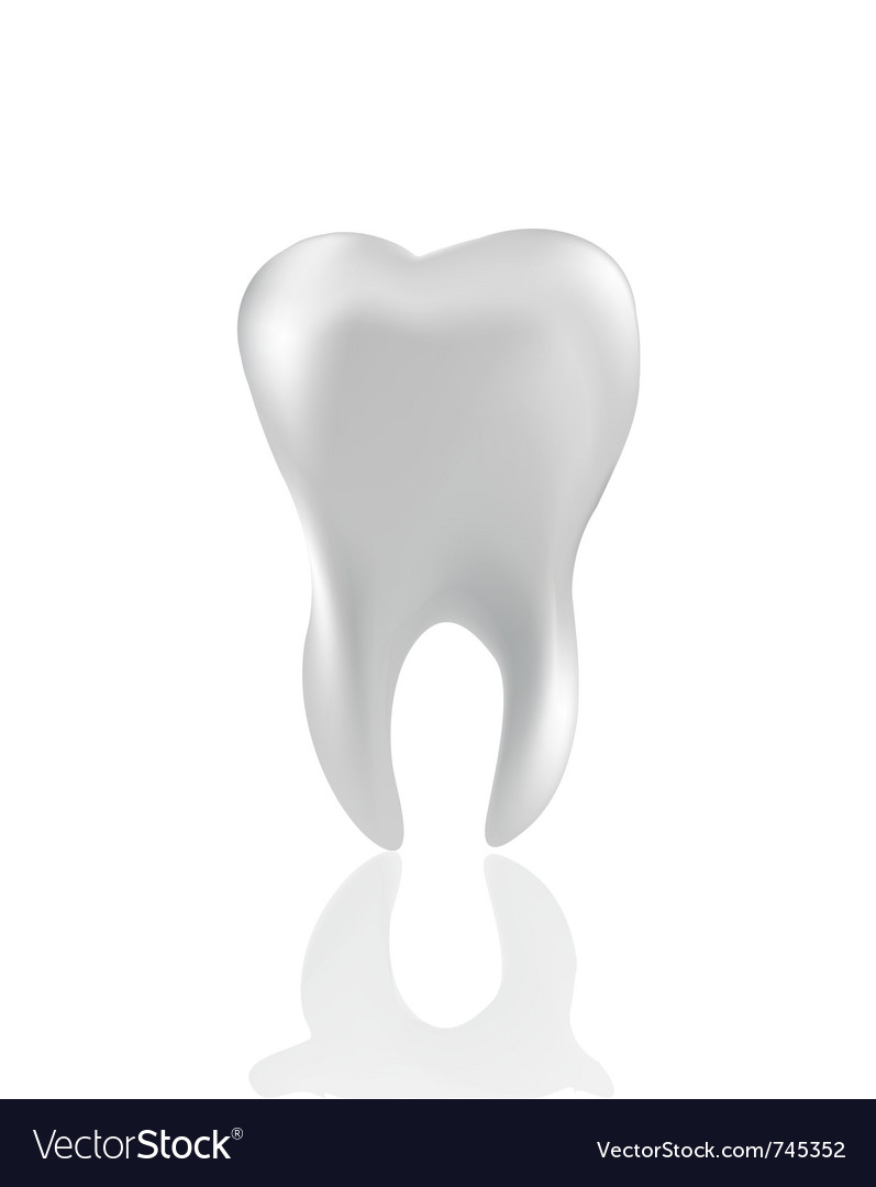 Tooth isolated on white vector | Price: 1 Credit (USD $1)