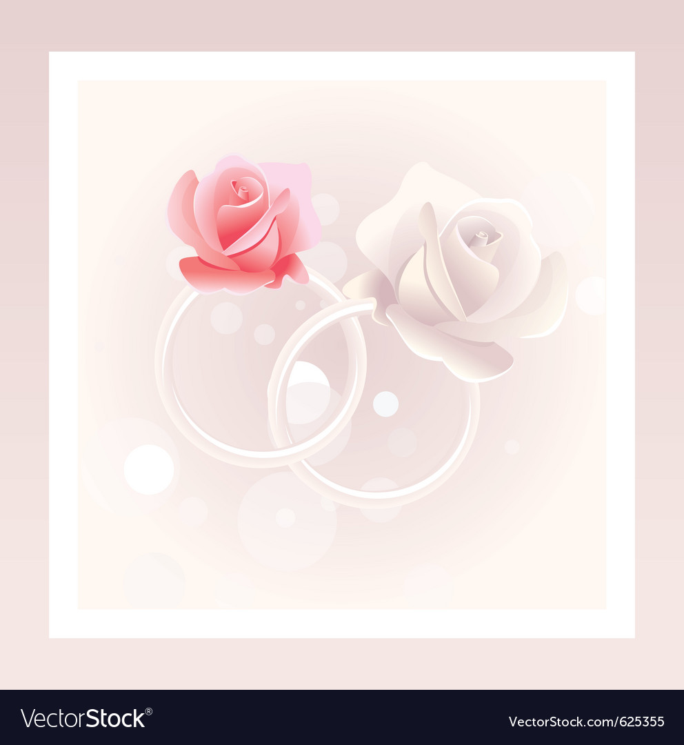 Wedding rings and roses vector | Price: 1 Credit (USD $1)