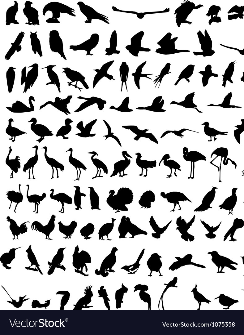100 birds vector | Price: 1 Credit (USD $1)