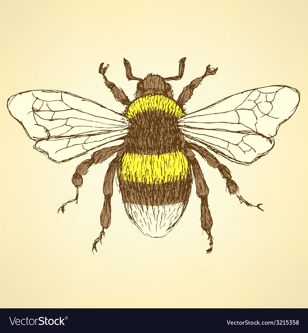 Sketch bumble bee in vintage style vector | Price: 1 Credit (USD $1)