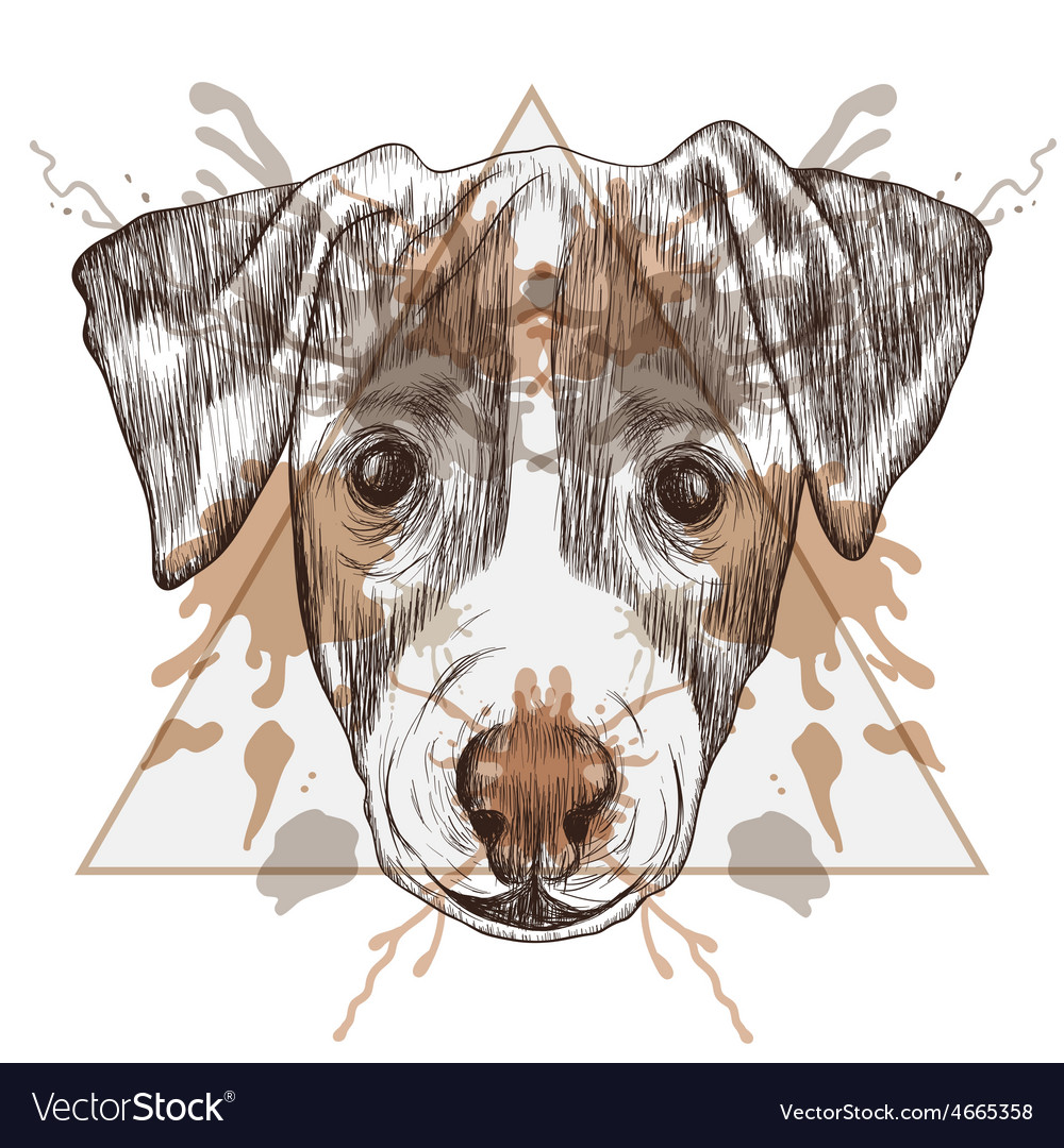 Sketch hipster jack russel terrier face in vector | Price: 1 Credit (USD $1)