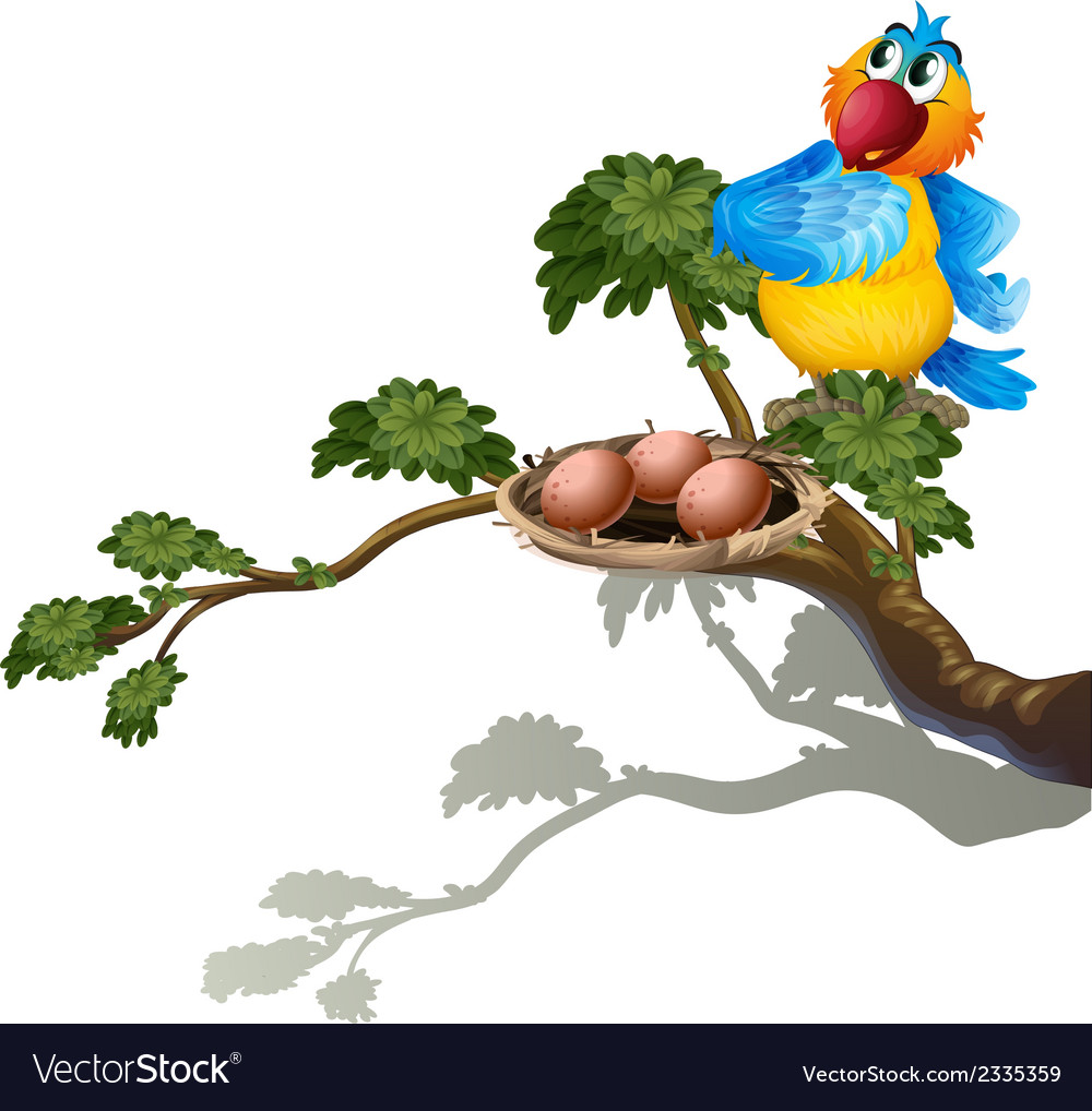 A parrot watching the eggs in the nest vector | Price: 1 Credit (USD $1)