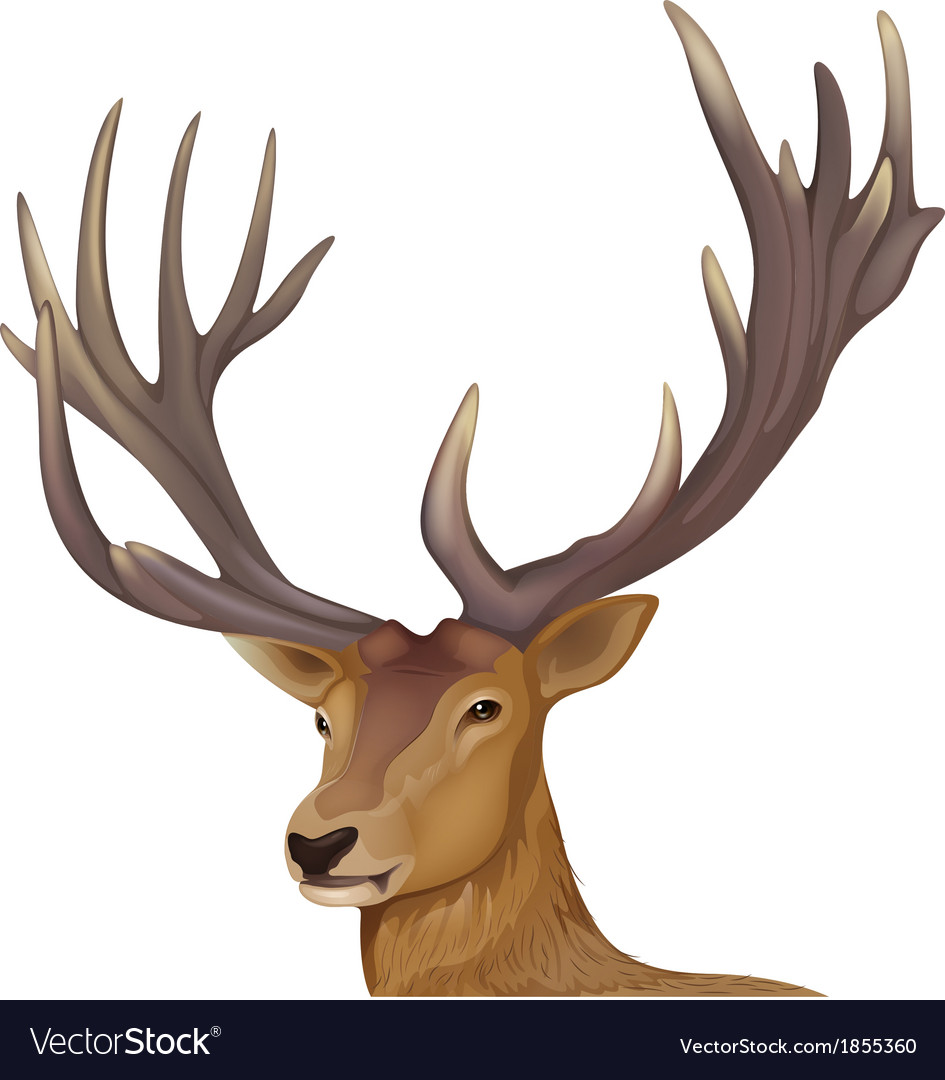 A male deer vector | Price: 1 Credit (USD $1)