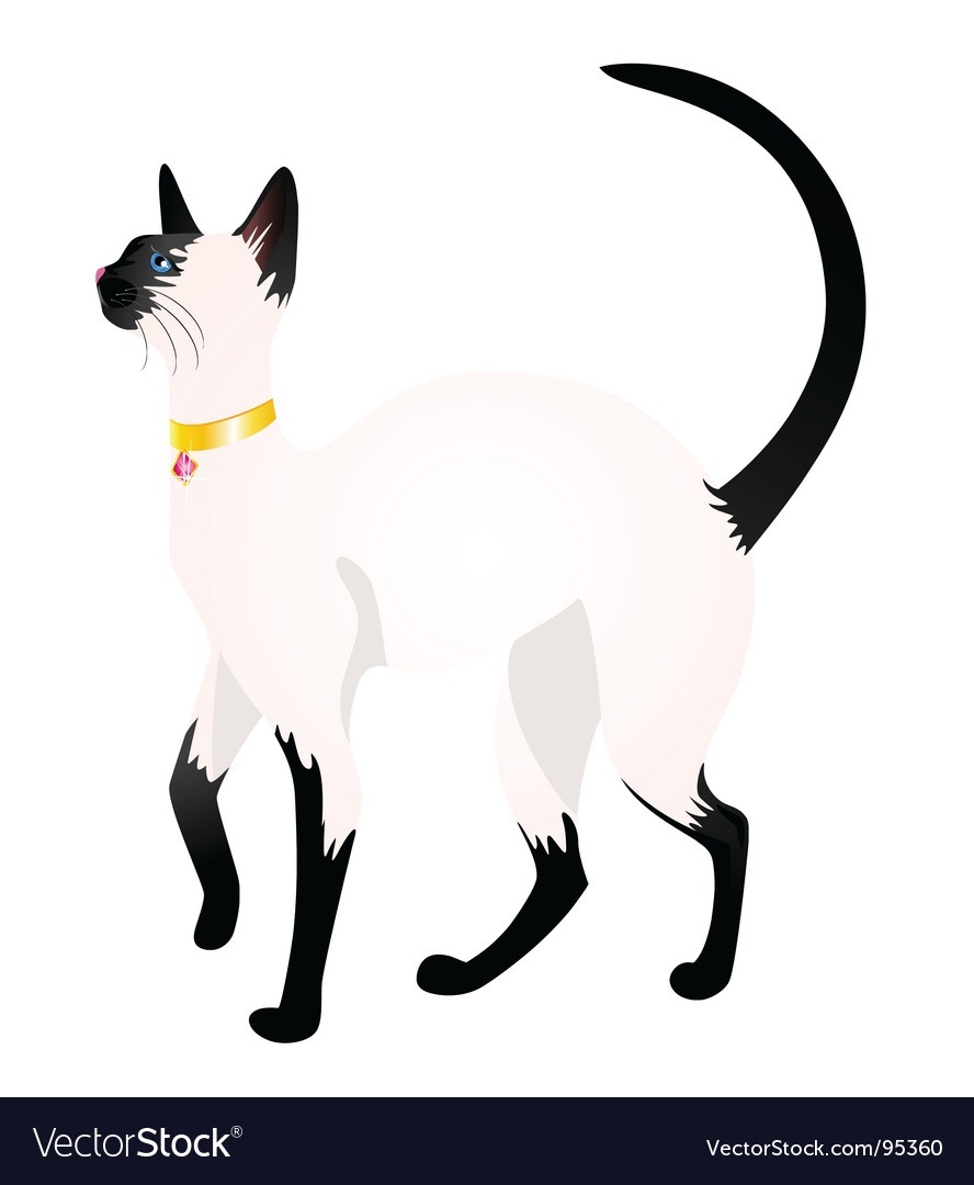Siamese vector | Price: 1 Credit (USD $1)
