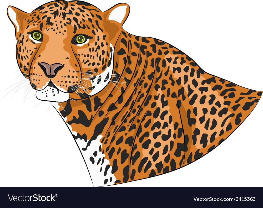 Jaguar vector | Price: 1 Credit (USD $1)