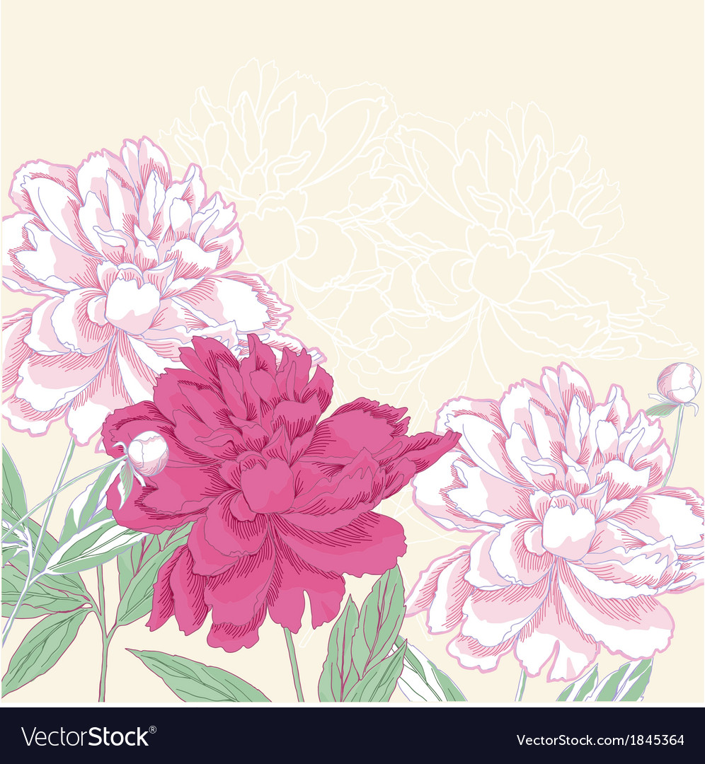 Background with pink peony vector | Price: 1 Credit (USD $1)