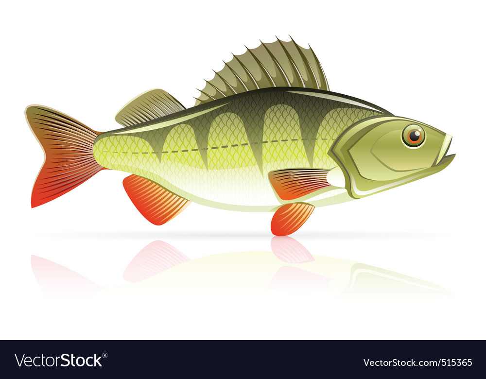 Perch vector | Price: 3 Credit (USD $3)