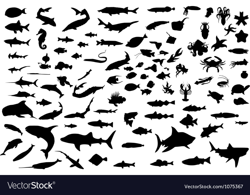 100 fish vector | Price: 1 Credit (USD $1)