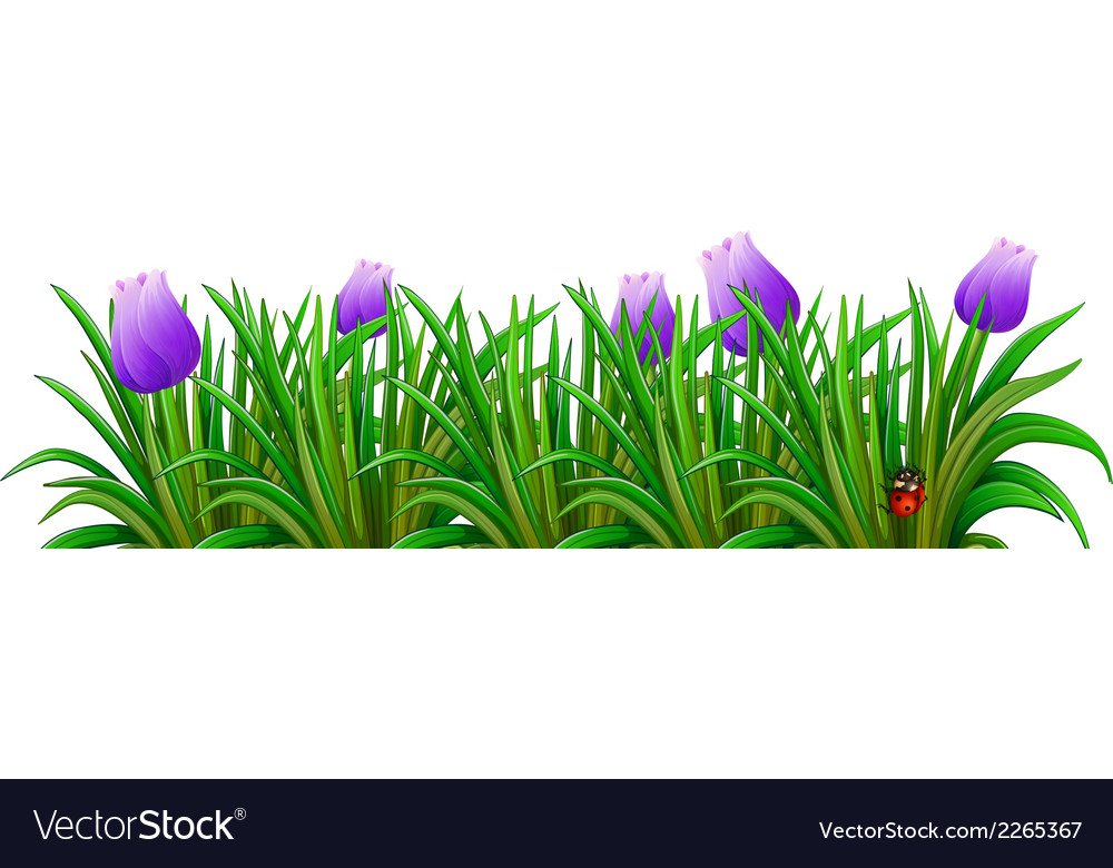 A flowering plant with violet flowers vector | Price: 1 Credit (USD $1)