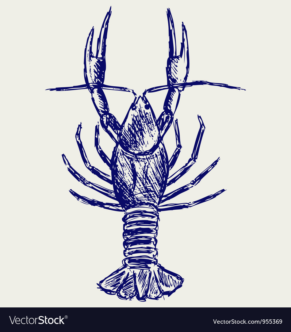 Crayfish sketch vector | Price: 1 Credit (USD $1)