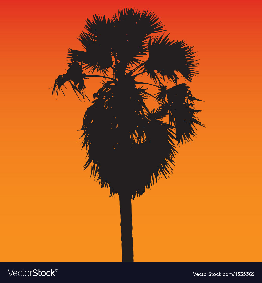 Sugar palm silhouette vector | Price: 1 Credit (USD $1)