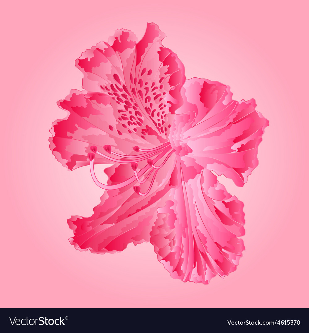 Flower pink simple rhododendron vector | Price: 1 Credit (USD $1)