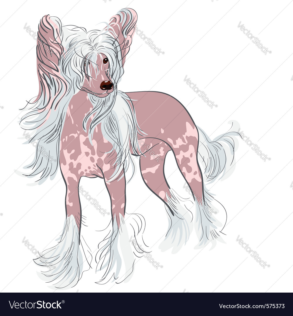 Chinese crested dog vector | Price: 3 Credit (USD $3)