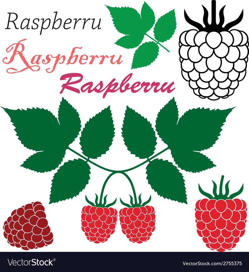 Raspberry vector | Price: 1 Credit (USD $1)