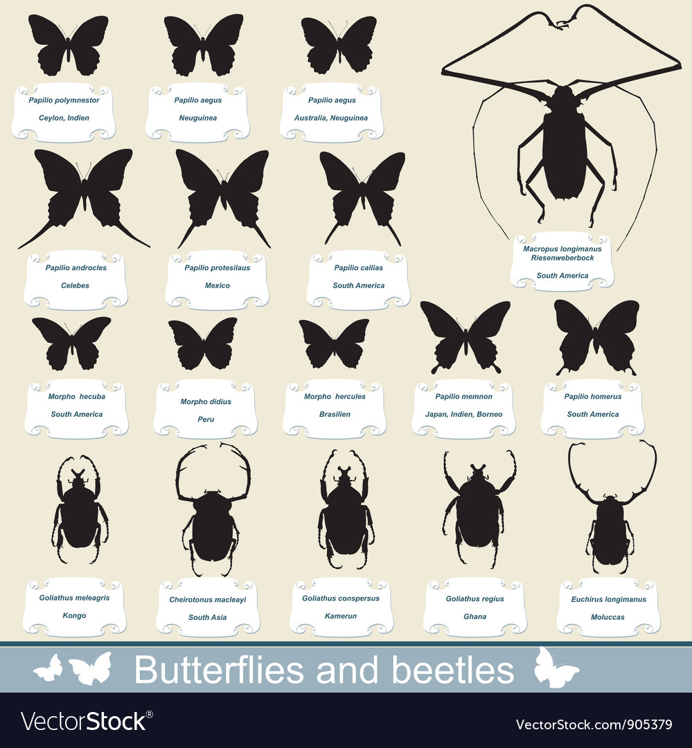 Beetles and butterflies vector | Price: 1 Credit (USD $1)