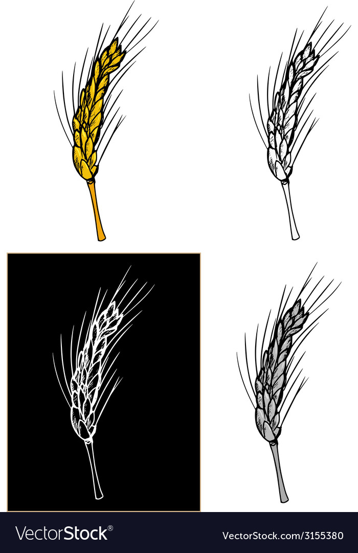 Ear of wheat vector | Price: 1 Credit (USD $1)
