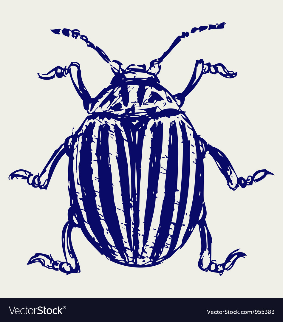 Beetle leptinotarsa decemlineata vector | Price: 1 Credit (USD $1)