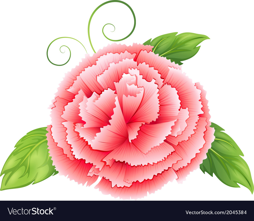 A carnation pink flower with leaves vector | Price: 1 Credit (USD $1)