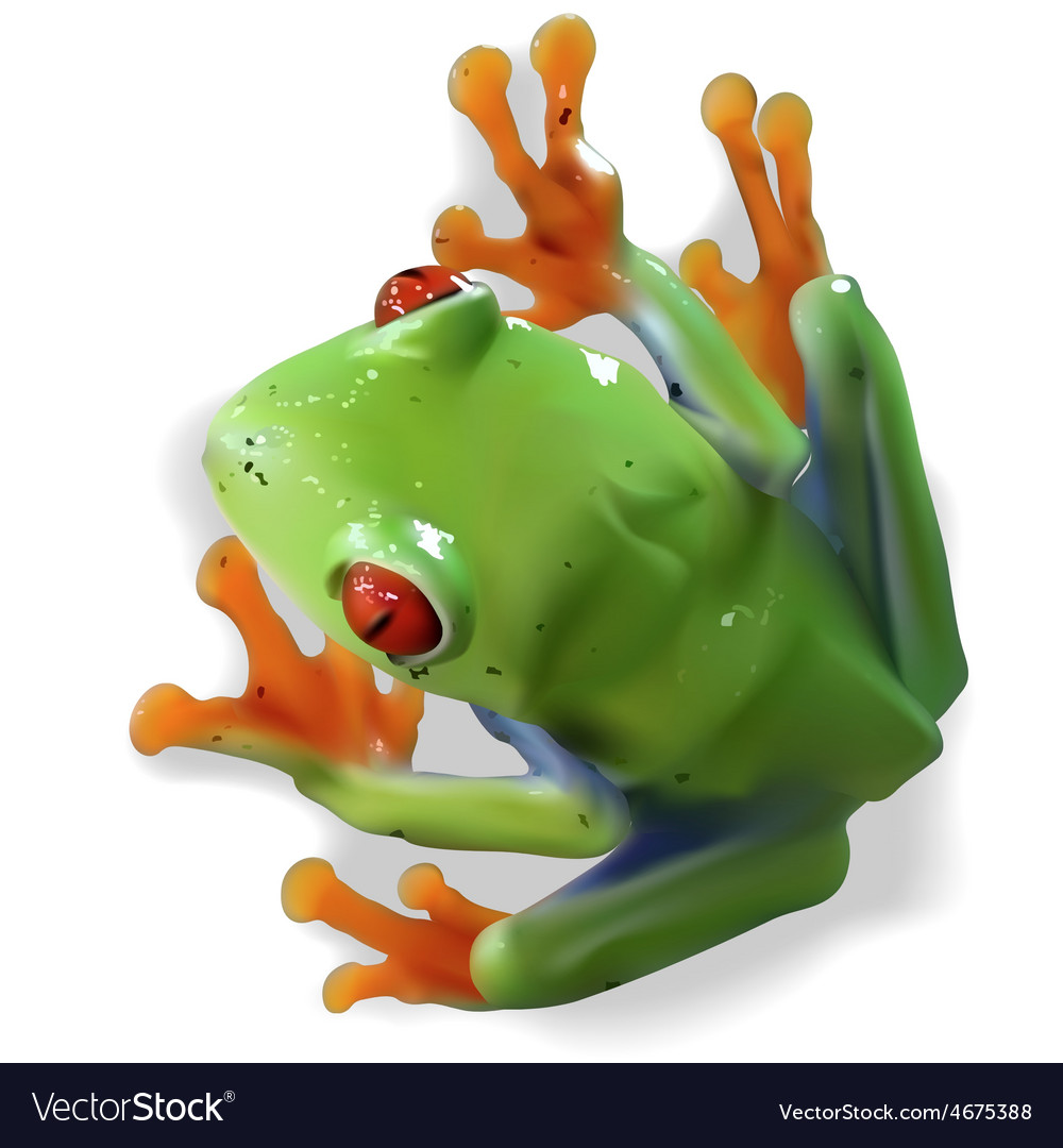 Red-eyed tree frog vector | Price: 3 Credit (USD $3)