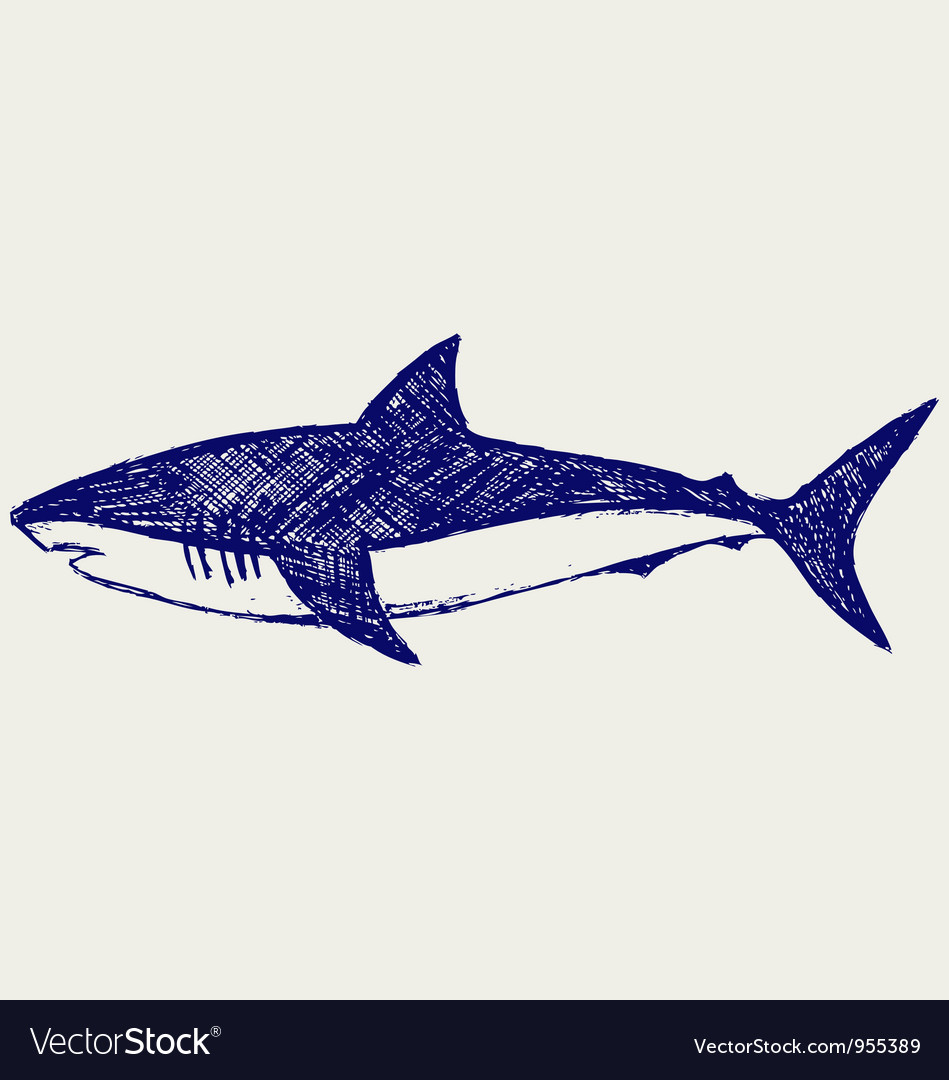 Reef shark vector | Price: 1 Credit (USD $1)