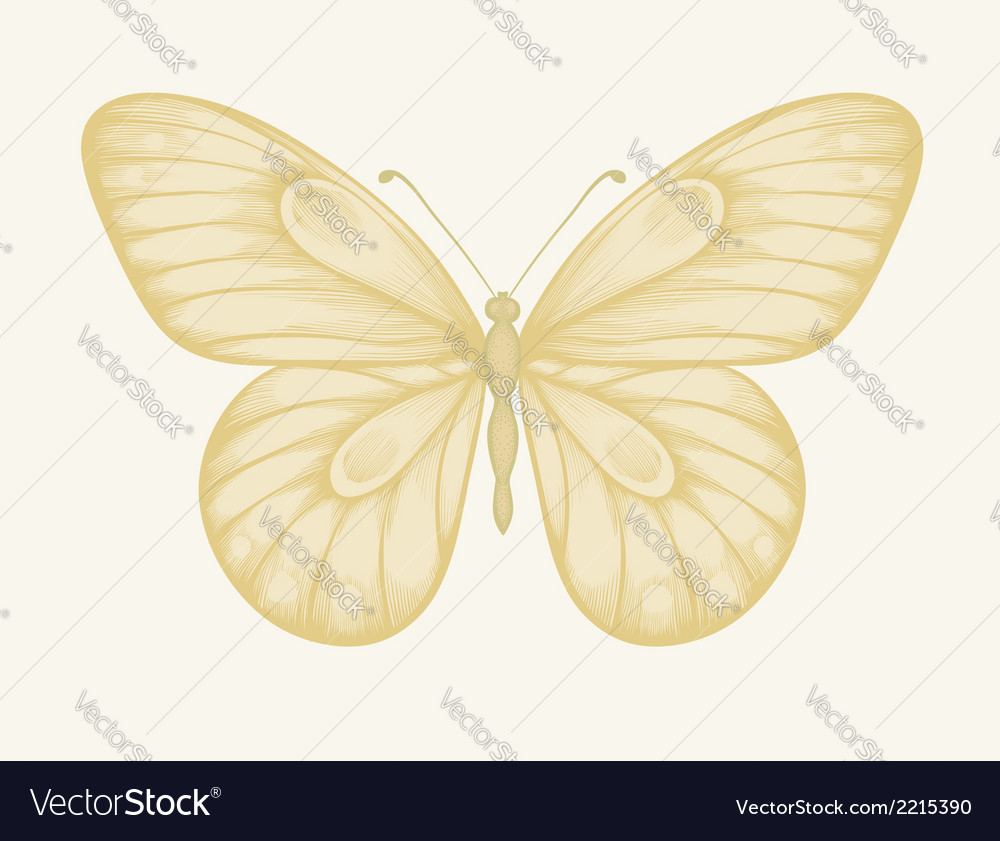 Beautiful butterfly in pastel colors vector | Price: 1 Credit (USD $1)