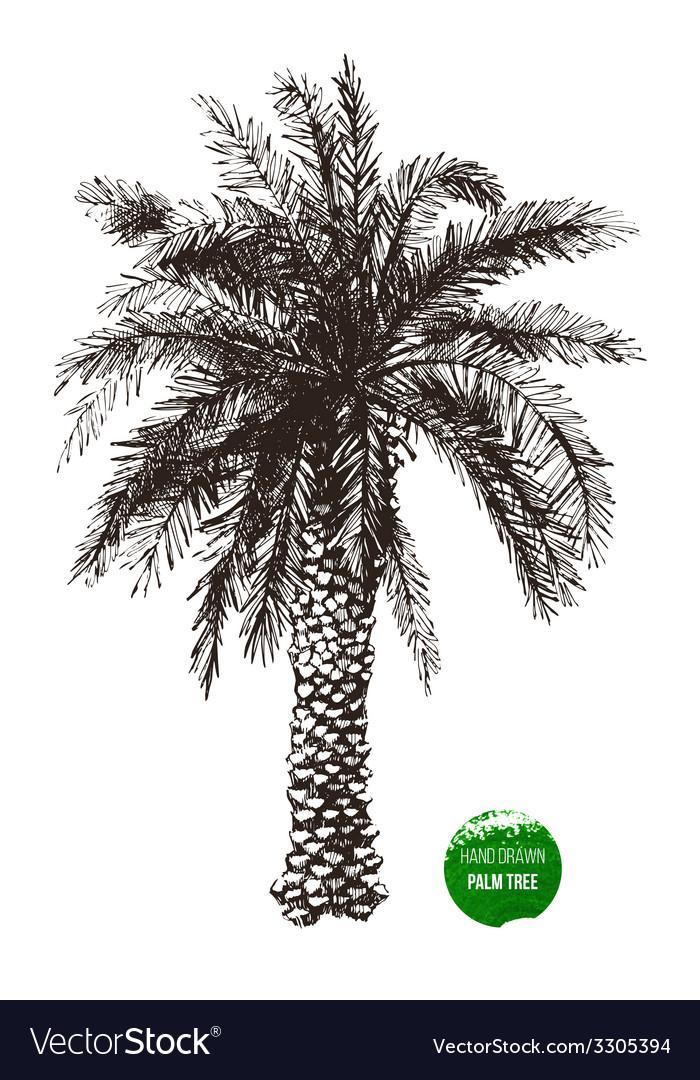 Hand drawn palm tree vector | Price: 1 Credit (USD $1)