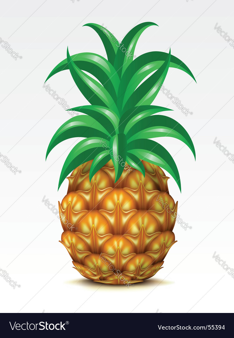 Pineapple vector | Price: 3 Credit (USD $3)