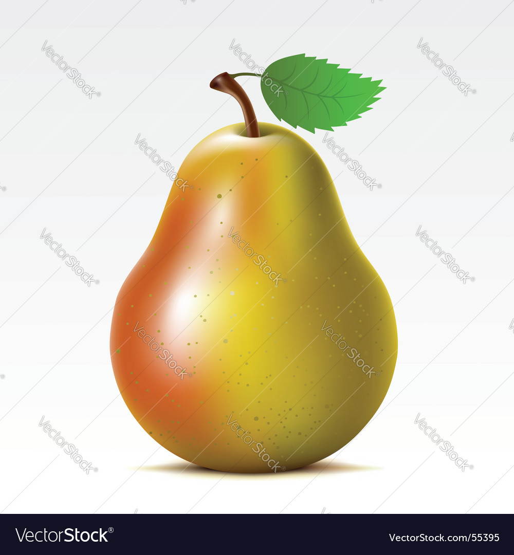 Pear vector | Price: 3 Credit (USD $3)