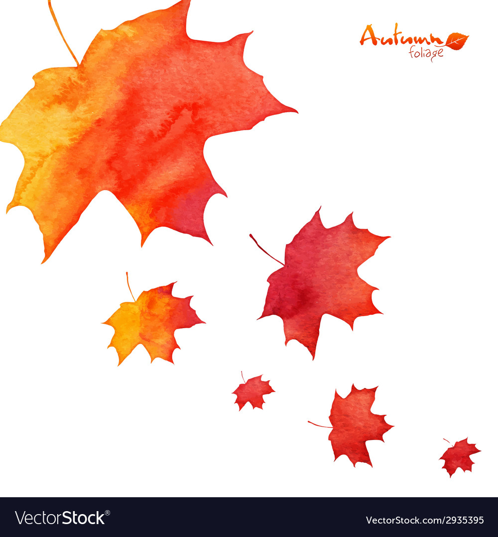 Watercolor painted orange maple leaves fall vector   Price: 1 Credit (USD $1)