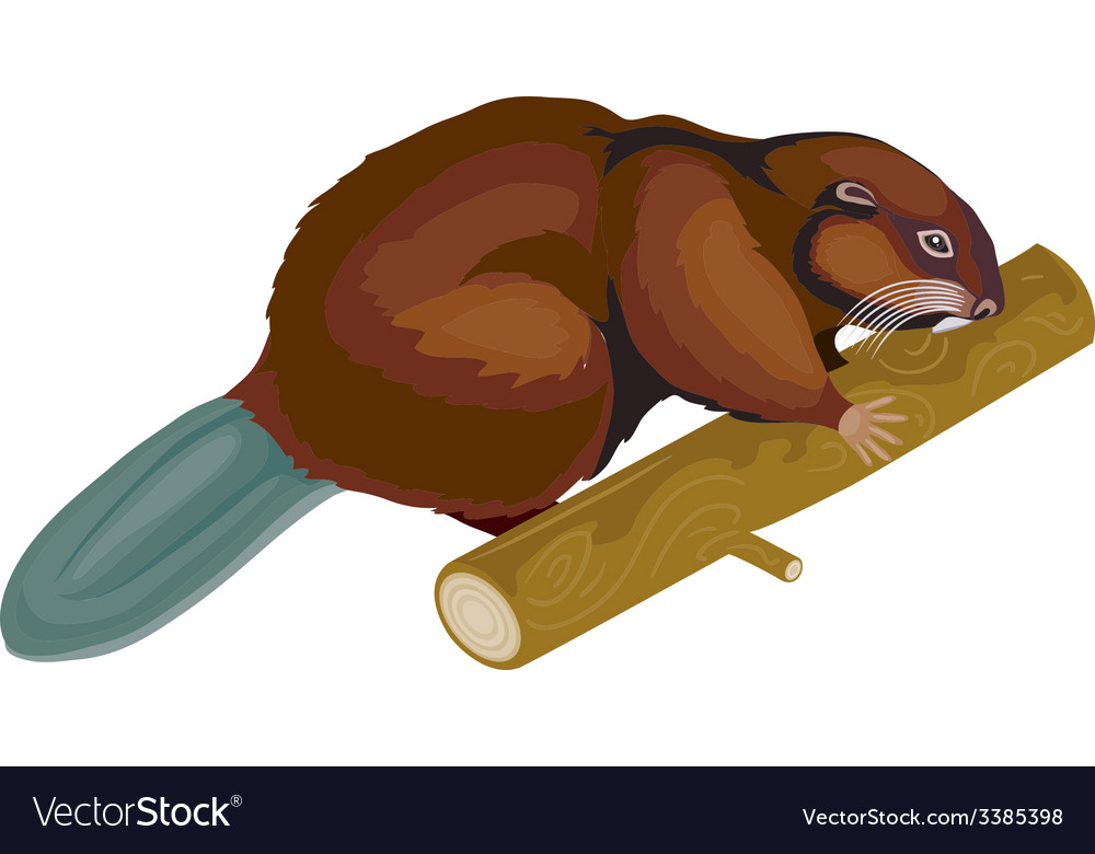 Beaver vector | Price: 1 Credit (USD $1)
