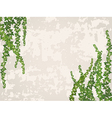 Old wall with ivy branch vector