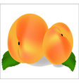 Two ripe peach fruit with leaves vector