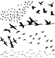 Silhouette a flock of birds vector
