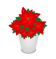 Red christmas poinsettia flower in a flower pot vector