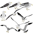 Set black silhouettes of seagulls on white vector