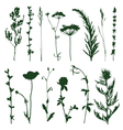 Meadow grass vector