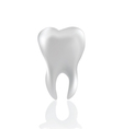 Tooth isolated on white vector