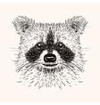 Sketch liner raccoon hand drawn in doodle style vector