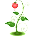 Nature plant vector