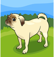 Pug dog cartoon vector