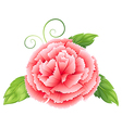 A carnation pink flower with leaves vector