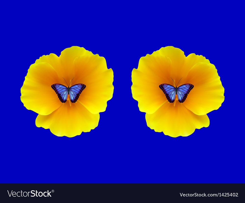 Two symmetrical california poppy and butterflies vector | Price: 1 Credit (USD $1)