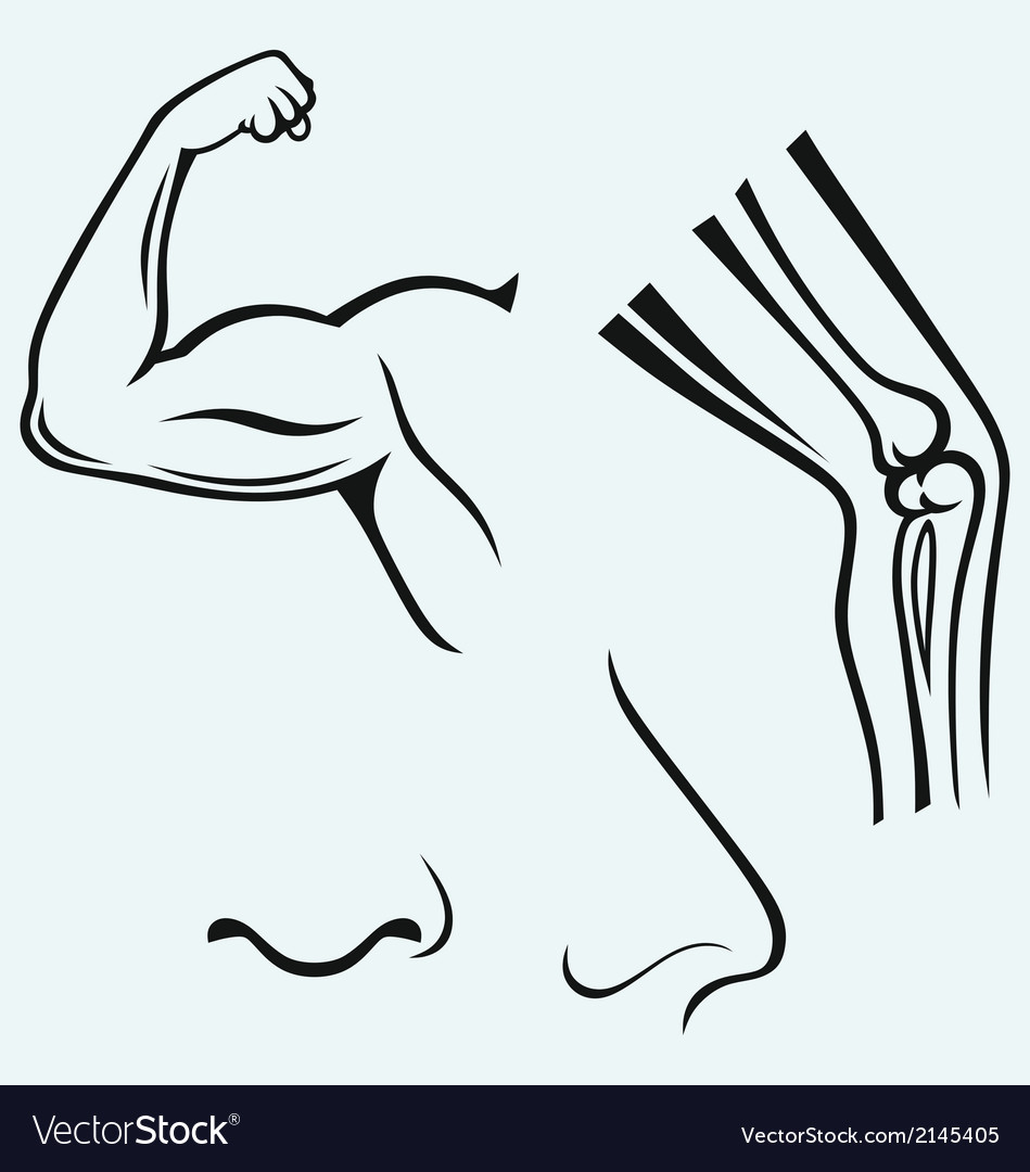Human body parts vector | Price: 1 Credit (USD $1)