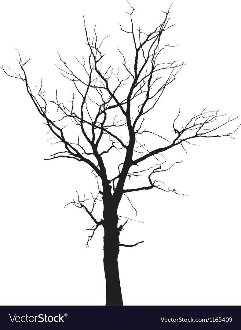 Autumn tree silhouette vector