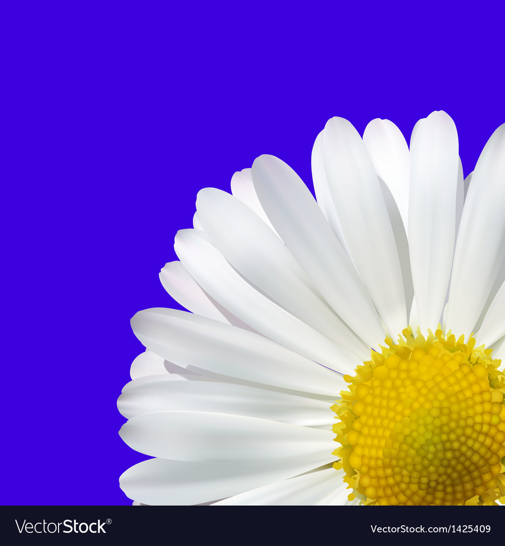 Daisy flower on a blue background vector | Price: 1 Credit (USD $1)