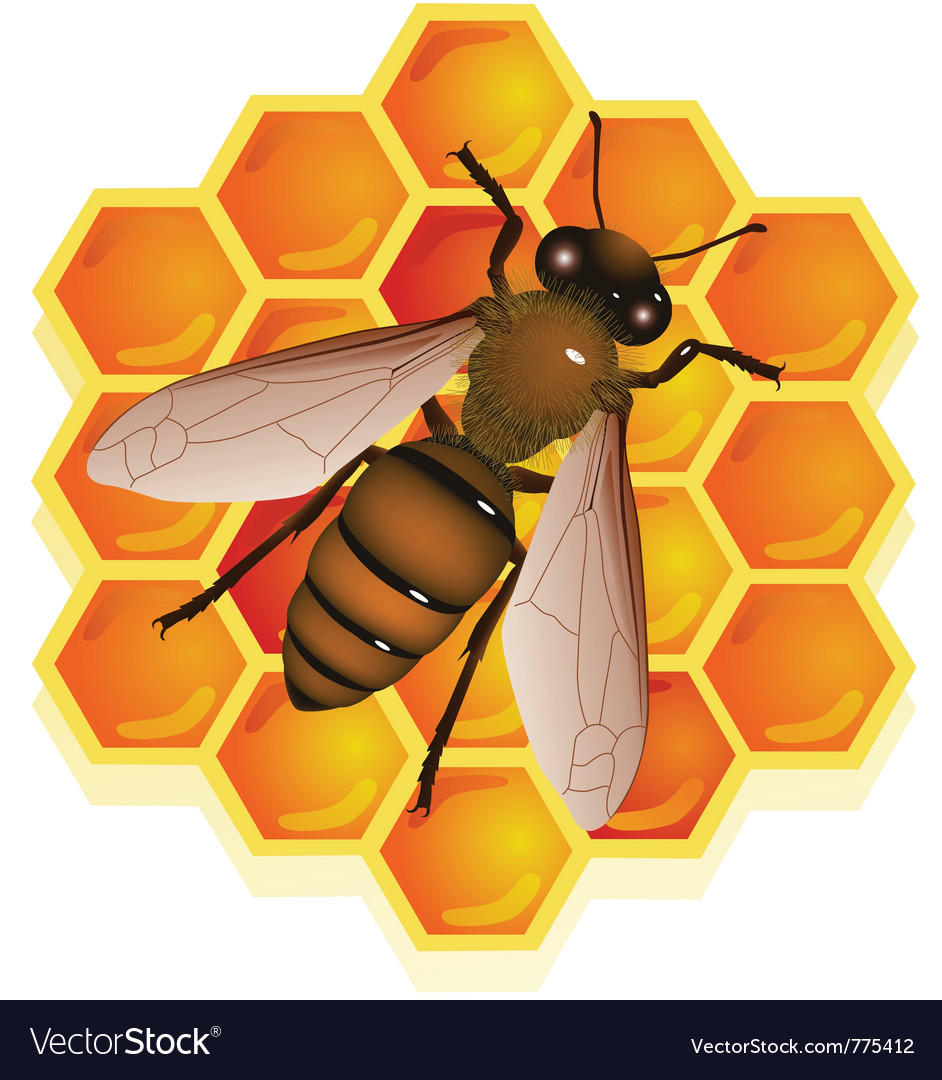 Bee with honeycomb vector | Price: 3 Credit (USD $3)