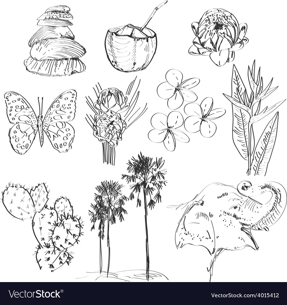 Set of doodle sketch strelitzia plumeria lotus vector   Price: 1 Credit (USD $1)