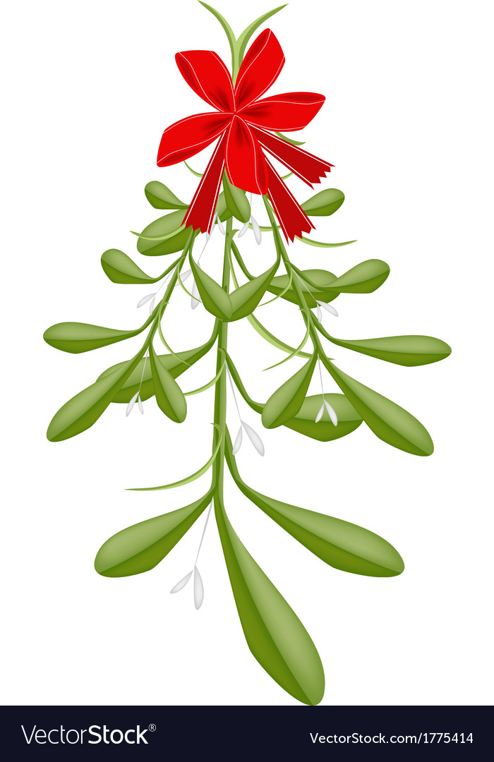 Hanging lovely green mistletoe with a red bow vector | Price: 1 Credit (USD $1)